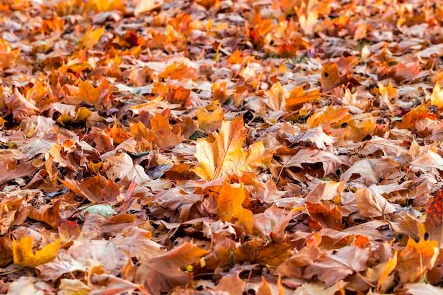 Gros plan sur la forêt d'automne
