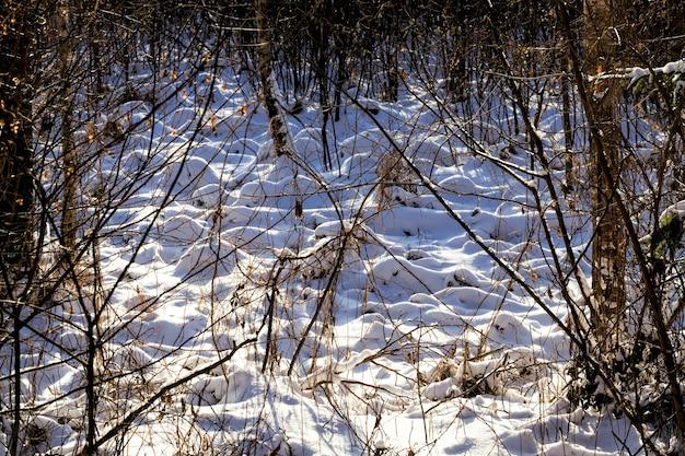 Gros plan sur la forêt en hiver