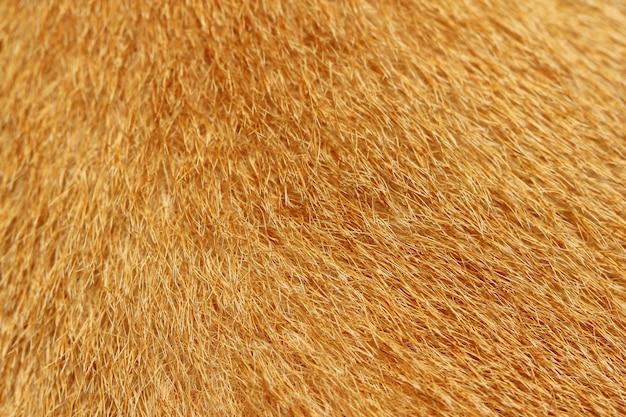 Gros plan sur la fourrure de l'animal, approprié comme arrière-plan