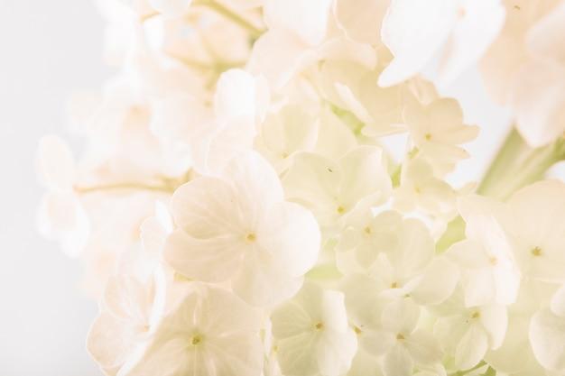 Gros plan, frais, blanc, fleurs, bouquet