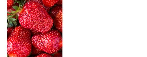 Gros plan sur la fraise sur fond blanc. bannière. espace de copie.