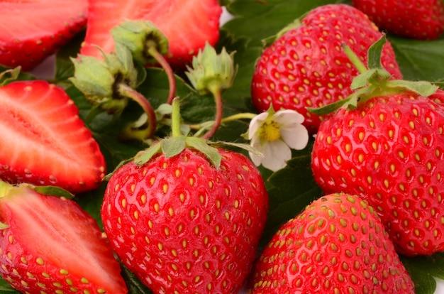 Gros plan de fraises fraîches