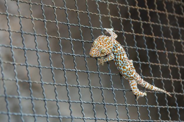Gros plan d'un gecko sur un treillis métallique