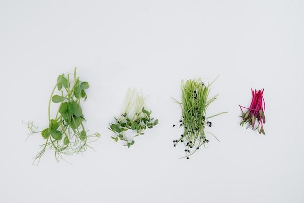 Gros plan de germes micro-verts sur fond blanc avec espace libre