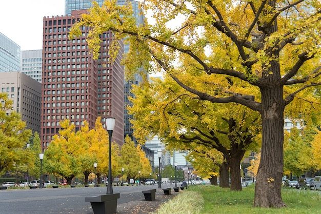Gros plan, de, gingko, arbre, dans, automne