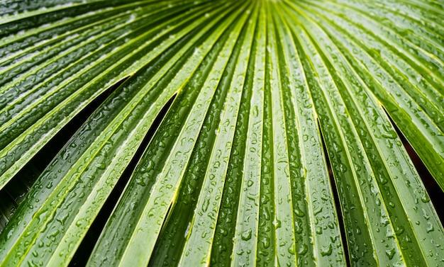 Gros plan de gouttes d'eau au niveau des feuilles de palmier à la palm house de kew gardens à londres, au royaume-uni.