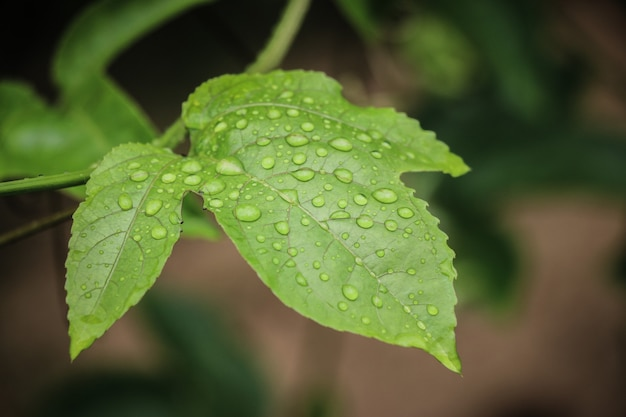 Gros plan sur les gouttes d'eau sur les feuilles