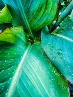 Un gros plan de gouttes de rosée se trouve sur les feuilles des plantes après la pluie. macro. flou artistique flou artistique
