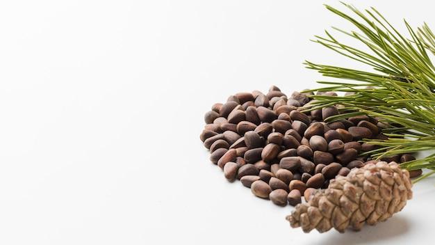 Gros plan des graines de pin avec espace copie