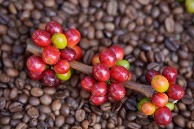 Gros plan sur des grains de café crus avec des grains de café torréfiés en arrière-plan.