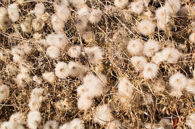 Gros plan grand angle de plantes sauvages blanches avec des bâtons secs