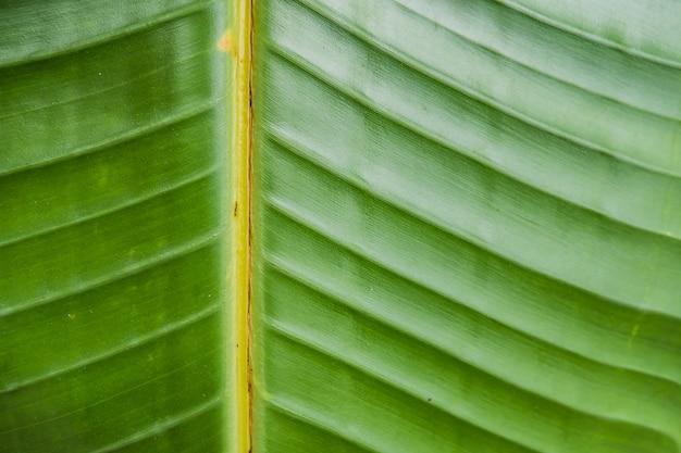 Gros plan d'une grande belle feuille verte humide