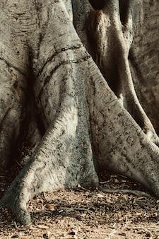 Gros plan d'une grande racine d'arbre dans le sol.