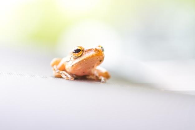 Gros plan d'une grenouille