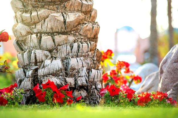 Gros plan d'un gros tronc de vieux palmier poussant sur la pelouse d'herbe verte avec des fleurs rouges autour.
