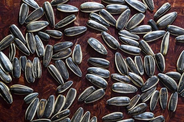 Gros plan de grosses graines une joie pour le rongeur