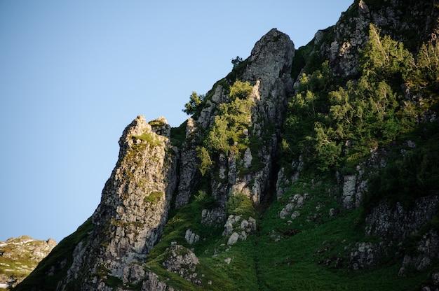 Gros plan d'une haute falaise verte