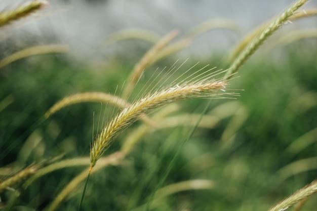 Gros plan de hautes herbes au pâturage