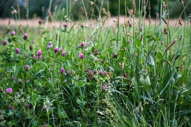 Gros plan de l'herbe et des fleurs dans un champ sous la lumière du soleil pendant la journée