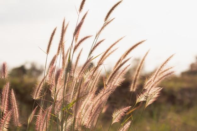Gros plan, herbe, fleurs