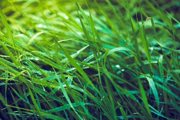Gros plan d'herbe fraîche verte