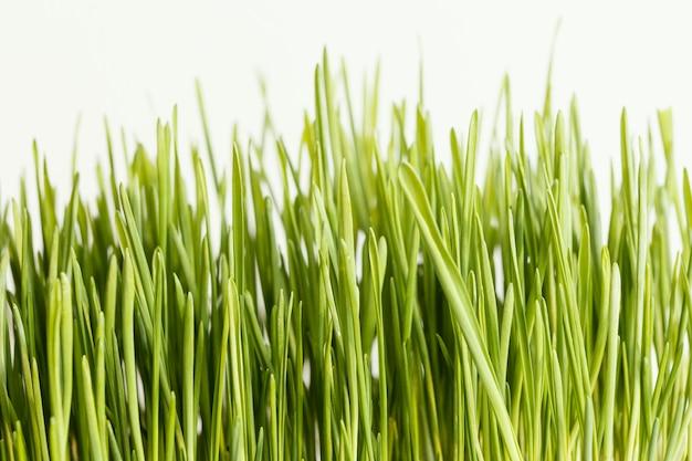 Gros plan de l'herbe naturelle