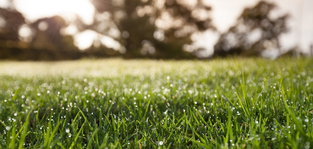 Gros plan d'herbe verte avec des arbres flous