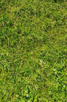 Gros plan d'herbe verte luxuriante poussant sur le sol