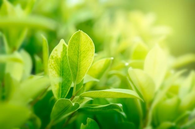 Gros plan d'herbe verte