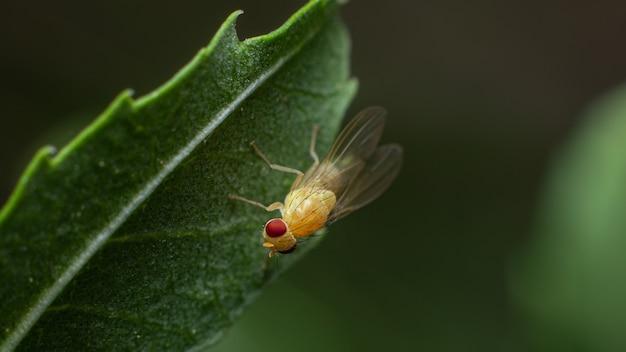Gros plan d'un insecte sur une feuille verte