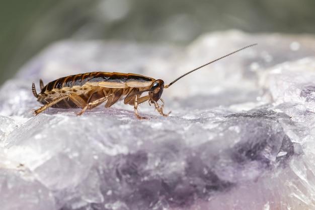 Gros plan d'insecte sur rocher propre