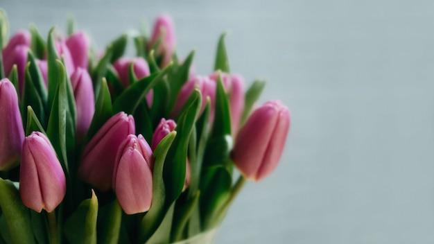 Gros plan intérieur de tulipes roses sur fond gris