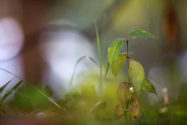 Gros plan, isolé, jeune, tendre, arbre, ou, herbe, germer, éclairé par soleil, à, toile araignée