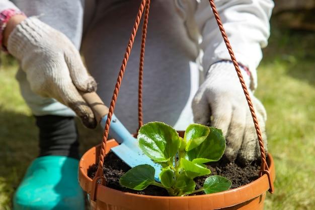 Gros plan, de, a, jardinier, dans, gants ménagers, planter, a, fleur, dans, a, pot, jour ensoleillé