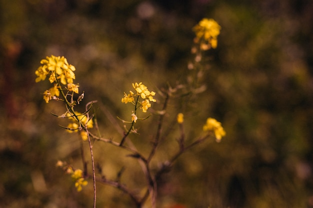 Gros plan, jaune, feuilles, soleil