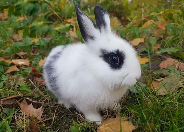 Gros plan un joli lapin assis sur l'herbe.