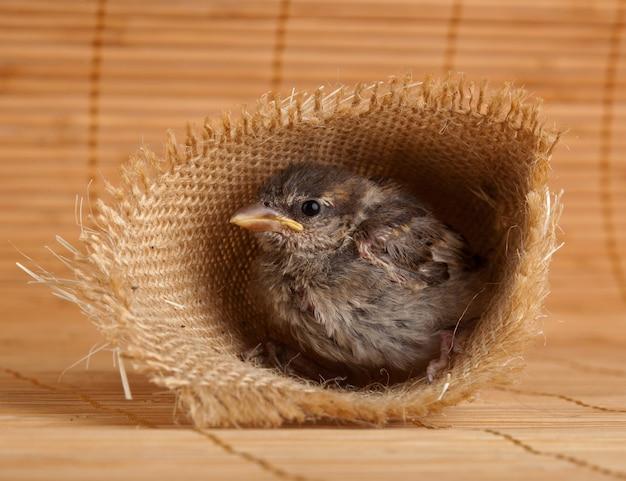 Gros plan d'un joli petit moineau dans un nid de jute