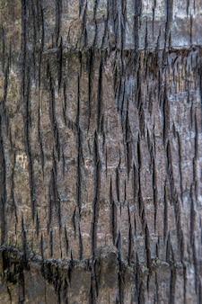 Gros plan de journal de tronçon isolé avec texture en bois.