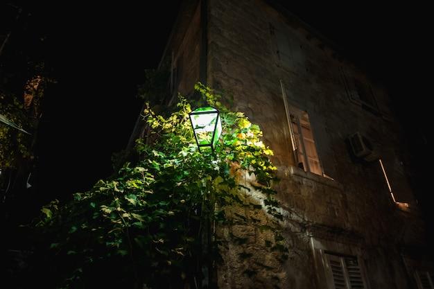 Gros plan d'une lanterne rougeoyante accrochée au mur avec du lierre en croissance