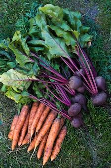 Gros plan de légumes frais, carottes orange et betteraves