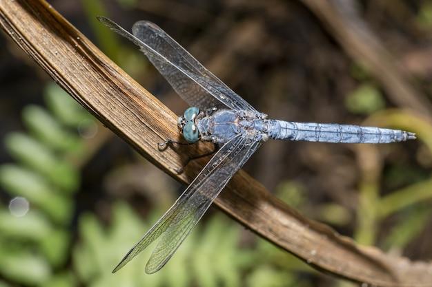 Gros plan de libellule bleue sur plante