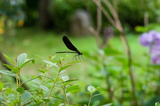 Gros plan d'une libellule noire sur une plante