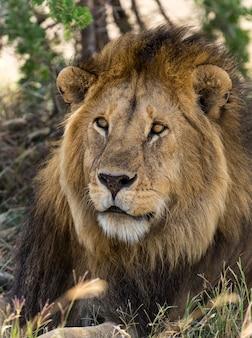Gros plan, de, a, lion, serengeti, tanzanie, afrique