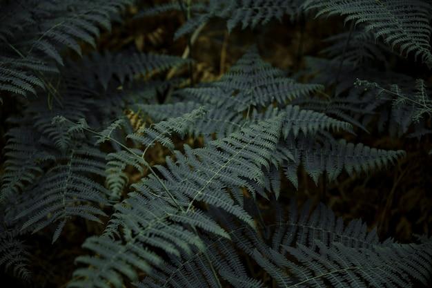 Gros plan, luxuriant, fougère, feuilles