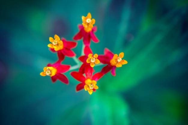 Gros plan macro de petites fleurs rouges vives