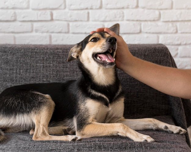Gros plan main caresser le chien smiley