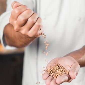 Gros plan de la main du boulanger mâle renversant des grains de blé sur les mains