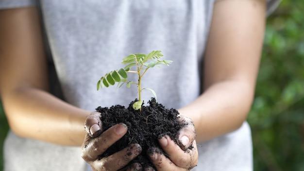 Gros plan, main femme, planter, jeune arbre