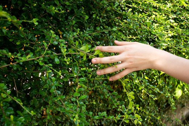 Gros plan de la main de la femme touchant la feuille de l'arbre pendant qu'elle marche dans le jardin.