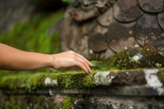 Gros plan d'une main de femme touche une mousse cultivée sur un rocher